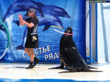 Фото: Акватория, Театр морских животных Акватория