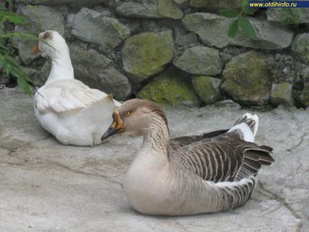 Фото: Ялтинский зоопарк «Сказка»