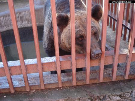 Фото: Екатеринбургский зоопарк