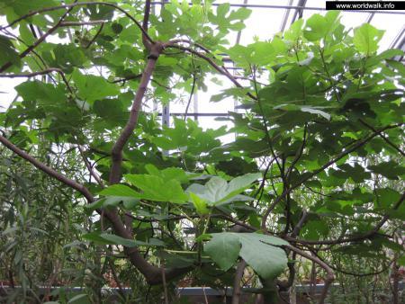 Фото: Ботанический сад Ботанического института им. В. Л. Комарова РАН