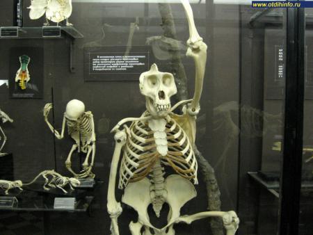 Фото: Зоологический музей МГУ им. М. В. Ломоносова