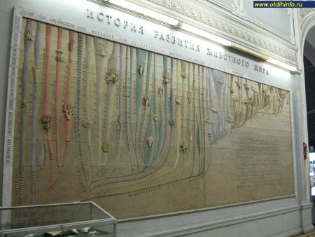Фото: Зоологический музей Зоологического института РАН