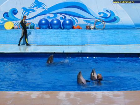 Фото: Севастопольский дельфинарий в Артбухте