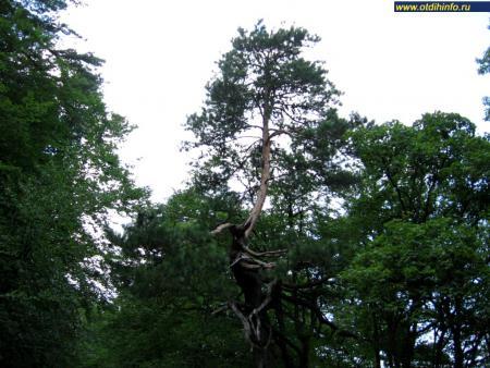 Фото: Крымский природный заповедник (Алушта)