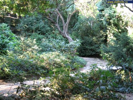 Фото: Никитский ботанический сад