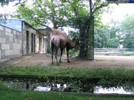 Фото: Берлинский зоопарк