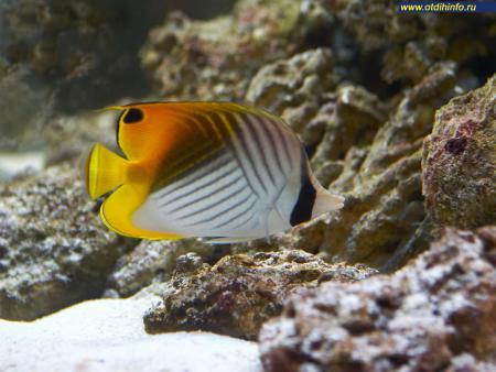 Фото: Океанариум на Чистых прудах, морской аквариум на Чистых прудах
